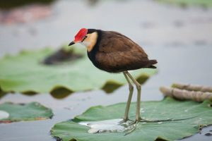 bird-image-featured